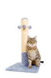 Piękny kot z chrobot poczta Zdjęcia Royalty Free