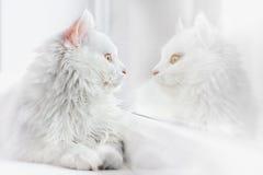 piękny kota blisko w bieli Fotografia Stock