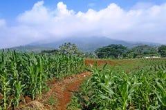 Piękny krajobraz Zdjęcia Royalty Free