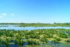 Piękny krajobraz Danube delta, Rumunia Zdjęcia Stock