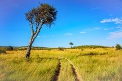 Piękny krajobraz droga gruntowa i drzewo w Kenja, Afryka Zdjęcie Royalty Free
