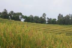 Piękny krajobraz i gospodarstwo rolne Zdjęcie Royalty Free