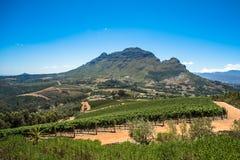 Pi?kny krajobraz przyl?dek Winelands, wino narastaj?cy region w Po?udniowa Afryka obraz royalty free