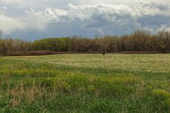 Pi?kny krajobraz w Czere?niowym zatoczka parku i rezerwuarze, Denver, Kolorado zdjęcie royalty free