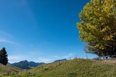 Piękny krajobraz z szczytowym Ifen w Kleinwalsertal dolinie, Austria Obraz Royalty Free
