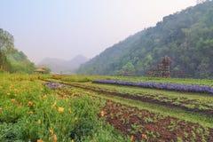 Piękny krajobrazowy las w Tajlandia Zdjęcia Royalty Free