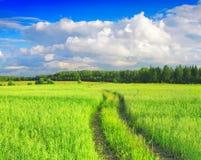 piękny krajobrazowy lato Obraz Royalty Free