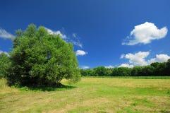 piękny krajobrazowy lato Fotografia Stock