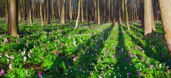 piękny krajobrazowy ranek Fotografia Stock