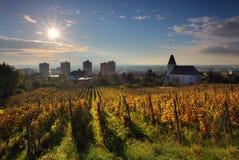 piękny krajobrazowy winnica Zdjęcia Royalty Free
