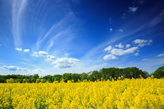 piękny krajobrazu shine Zdjęcia Royalty Free