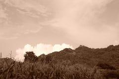 Piękny kukurydzanego pola przód wzgórza niebieskie niebo Tajlandia Asia Vinta Obrazy Royalty Free