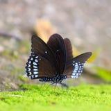 piękny kursu golfa zieleni wyspy koh krajobrazu samui niebo Thailand Zdjęcie Royalty Free
