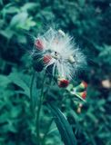 piękny kwiat obraz royalty free