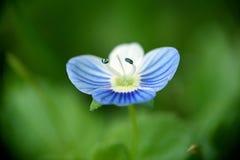 piękny kwiat Zdjęcia Royalty Free