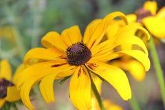 piękny kwiat Fotografia Royalty Free