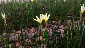 piękny kwiat Obrazy Royalty Free