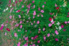 piękny kwiat Zdjęcie Royalty Free