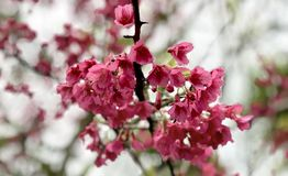 piękny kwiat Zdjęcia Stock