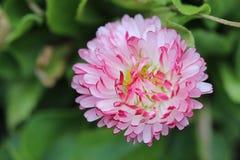 pi?kny kwiat obrazy royalty free