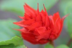 pi?kny kwiat zdjęcia royalty free