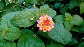 piękny kwiat dziki Fotografia Royalty Free