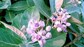 piękny kwiat dziki Zdjęcie Royalty Free