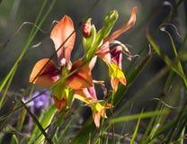 piękny kwiat dziki Obrazy Royalty Free