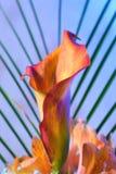 piękny kwiat egzotyczny Zdjęcie Royalty Free