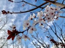 pi?kny kwiat i niebieskie niebo zdjęcie royalty free