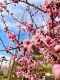 pi?kny kwiat i niebieskie niebo zdjęcia stock