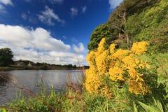 Piękny kwiat i scena Rzeczny Dee, Aberdeen - Zdjęcia Royalty Free