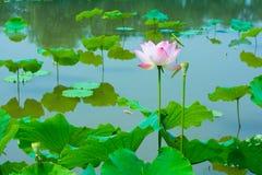 piękny kwiat Lato kolor Zdjęcie Royalty Free