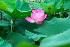 piękny kwiat Lato kolor Obraz Royalty Free