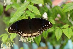 piękny kwiat motyla Obrazy Royalty Free
