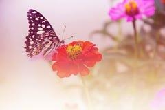 piękny kwiat motyla Fotografia Royalty Free