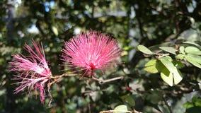 Piękny kwiat przy motylim muzeum Zdjęcia Royalty Free