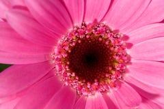piękny kwiat tryb makro Obraz Royalty Free
