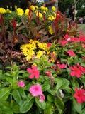 Piękny kwiat w Azja Malezyjskim rolnictwie, Horticulture & Agrotourism, Fotografia Stock