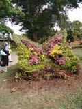 Piękny kwiat w Azja Malezyjskim rolnictwie, Horticulture & Agrotourism, Obraz Royalty Free