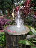 Piękny kwiat w Azja Malezyjskim rolnictwie, Horticulture & Agrotourism, Obrazy Royalty Free