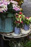 Piękny kwiat w garnkach w kwiatu sklepie Obrazy Royalty Free