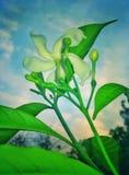 Piękny kwiat w wieczór Fotografia Stock