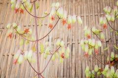 Piękny kwiat w wiosna czasu rocznika stylu Zdjęcie Royalty Free