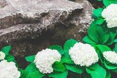 Piękny kwiatu ogród Obrazy Stock
