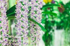 Piękny kwiatu ogród Obraz Stock
