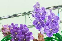 Piękny kwiatu ogród Fotografia Stock