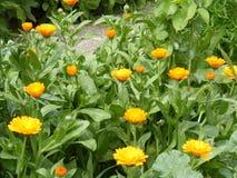 Piękny kwiatu ogród dla twój specjalnych projektów i Obrazy Stock
