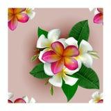 piękny kwiecisty deseniowy bezszwowy Fotografia Stock
