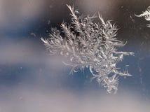 Piękny lód kwitnie na okno Fotografia Stock